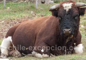 Vie paisible en Patagonie