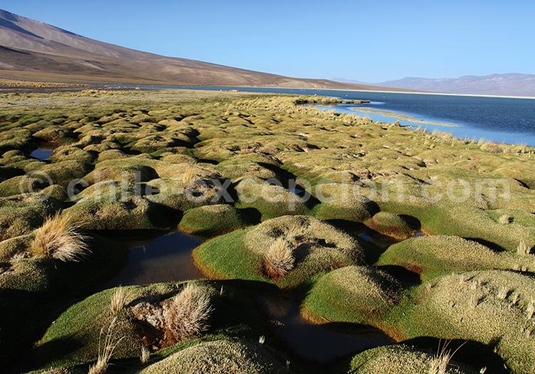 Paysage sauvage, nature du Chili