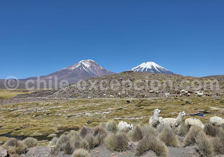 Endroit magnifique dans les bofedales du Nord du Chili