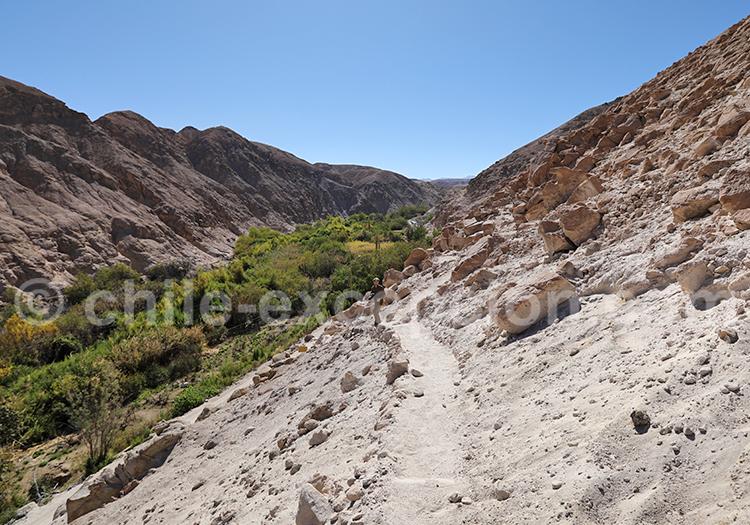 Site de Pétroglyphes de Ofragía, vallée de Codpa