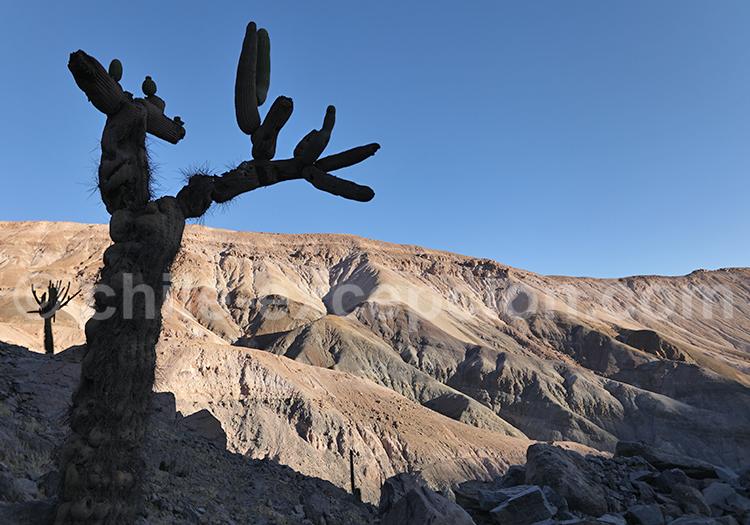 Tourisme dans le désert, Nord du Chili