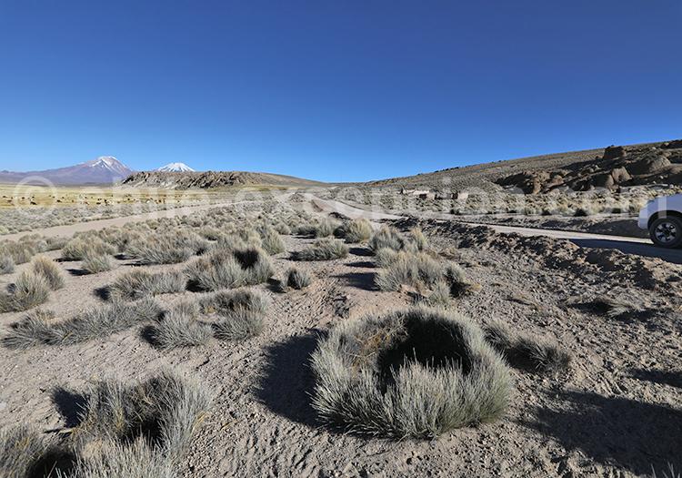 Voyage autotour bofedales de Caquena, Chili