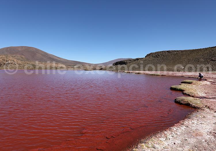 Voyage autotour, Laguna Roja, Chili