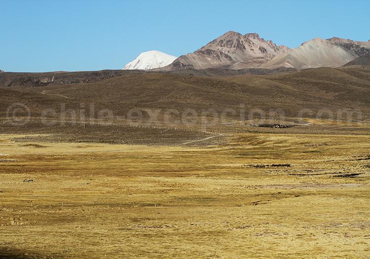 Caquena, Chili