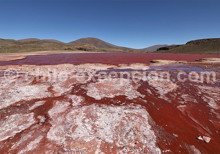 Trésors des Andes, Laguna Roja, Chili