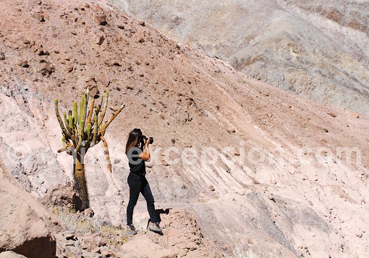 Tourisme dans la vallée de Camiña, Chili