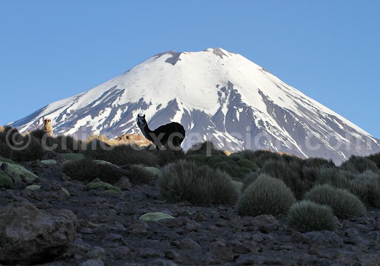Tourisme à Caquena, Chili