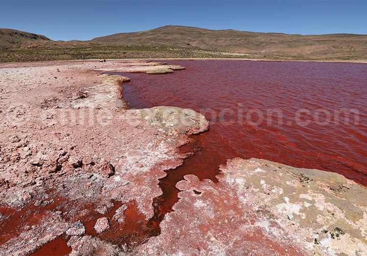 Laguna Roja, route de Camiña