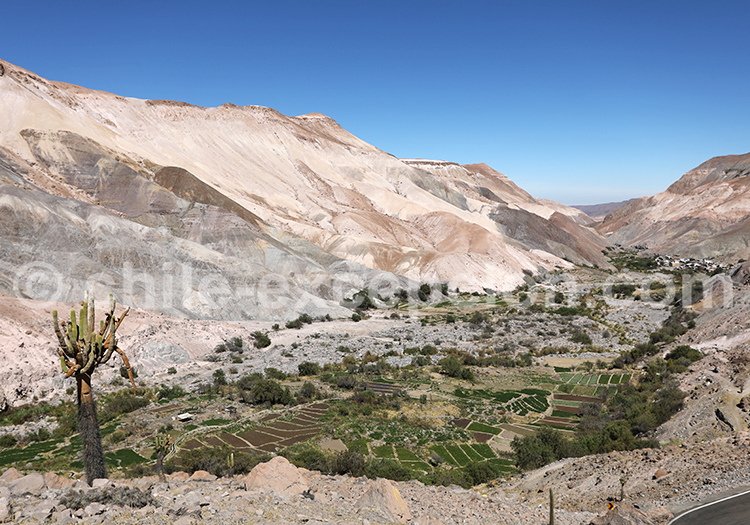 Francia, vallée de Camiña, Chili