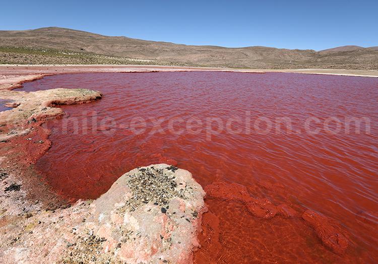 Voyage dans le Nord du Chili, laguna roja