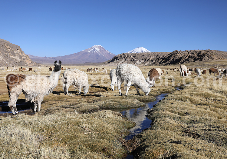 Observer les animaux des Andes, Chili
