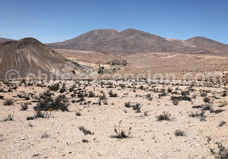 Désert de Codpa à Putre, Chili