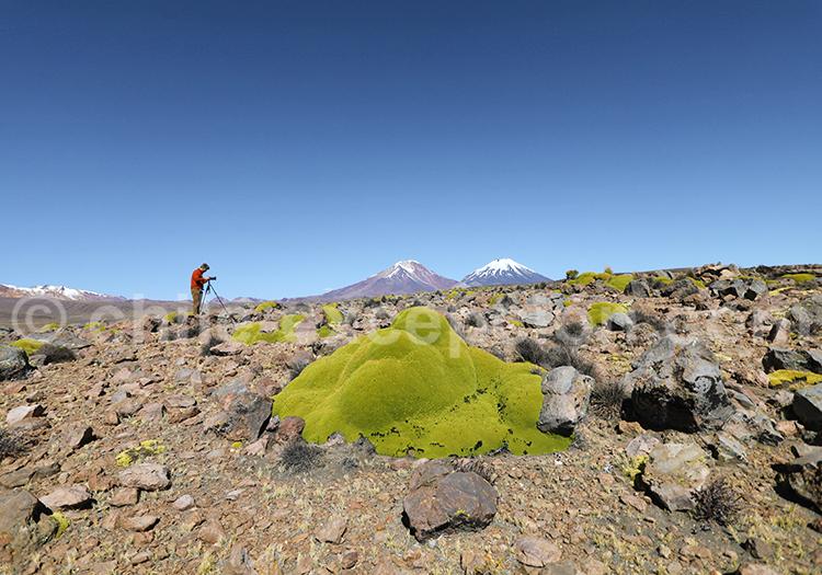 Photographe, au Chili, Amérique du Sud