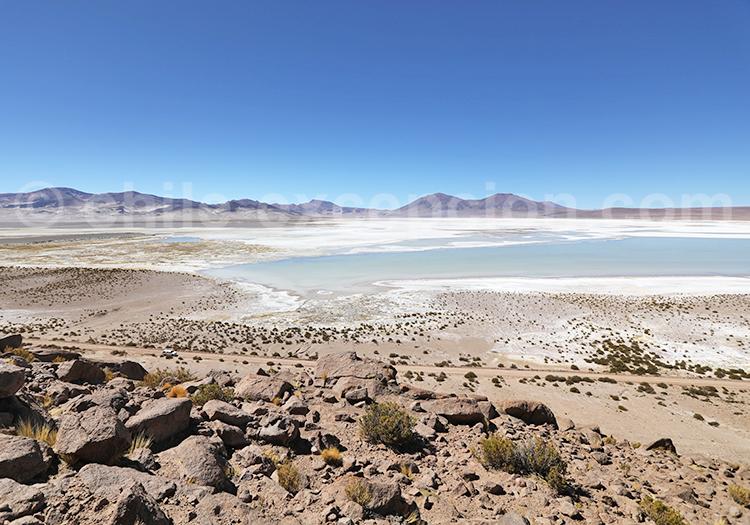 Visiter les salines du Chili, Salar de Huasco