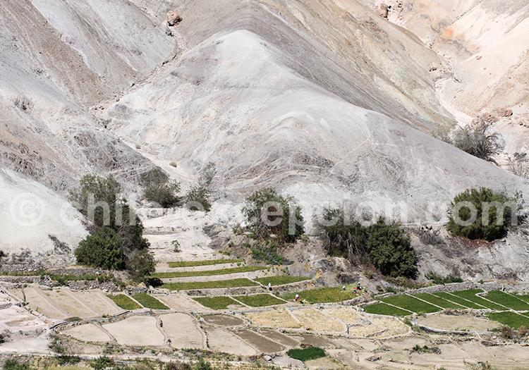 Village de Calatambo, vallée de Camiña, Chili