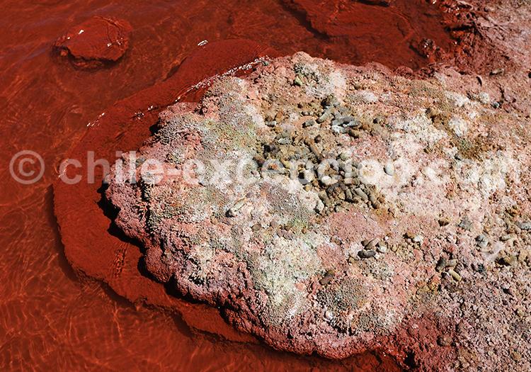 Alentours de Iquique, laguna roja
