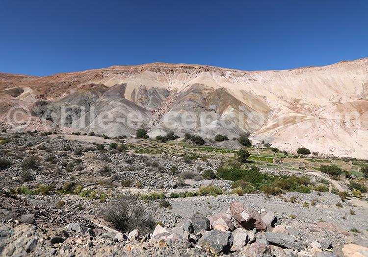 Venir dans la vallée de Camiña, Chili