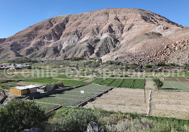 Quebrada de Tana, camiña, Chili
