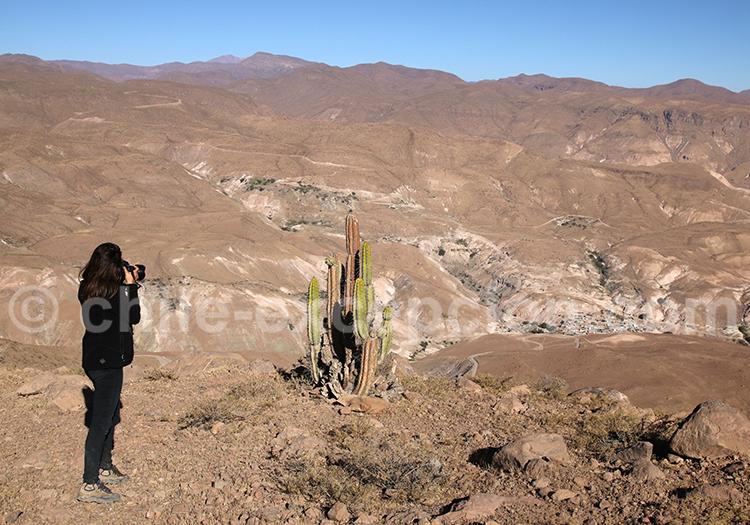 Photographie végétation du Nord du Chili