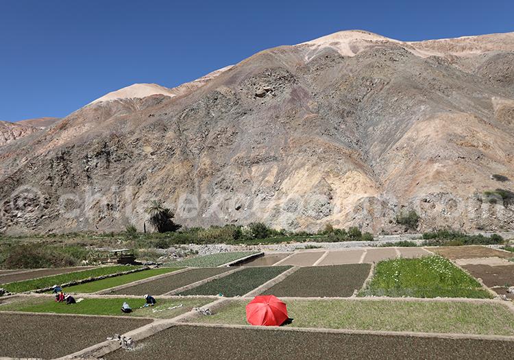 Se détendre dans la vallée de Camiña, Chili
