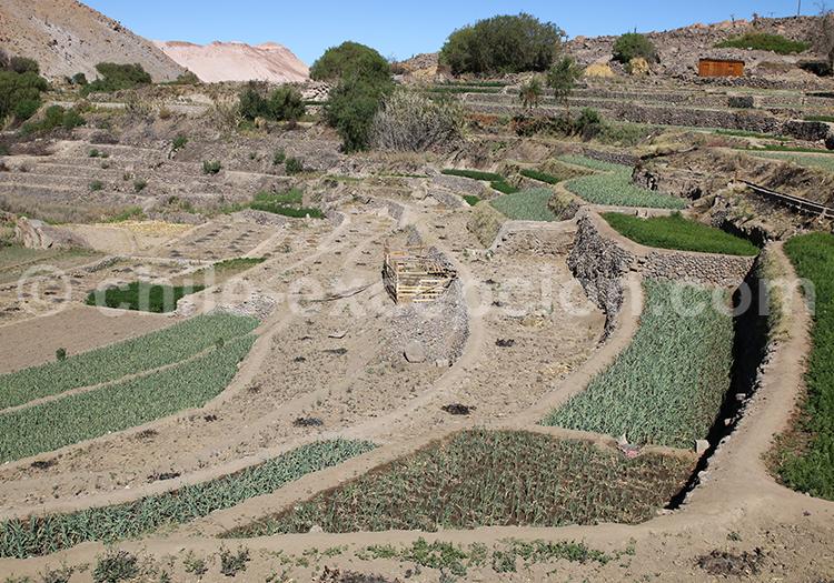 Vallée de Camiña, Altiplano andin
