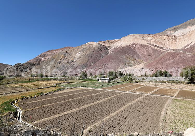 Quebrada de tana, Camiña, Nord du Chili