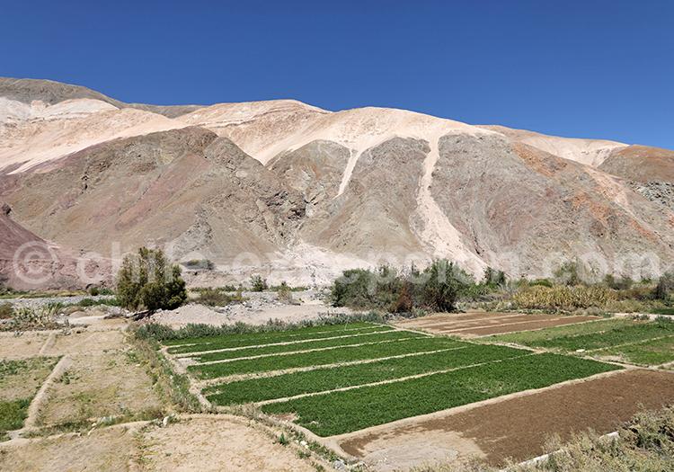 Villages et vallée de Camiña, Chili