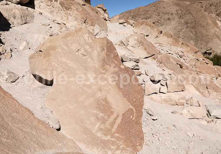 Origine des pétroglyphes de la vallée de Codpa