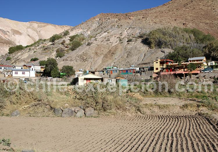 Apamilca, vallée de Camiña, Chili