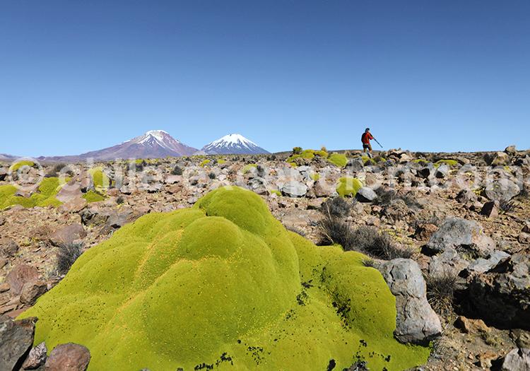 Reportage photos, désert du Nord du Chili