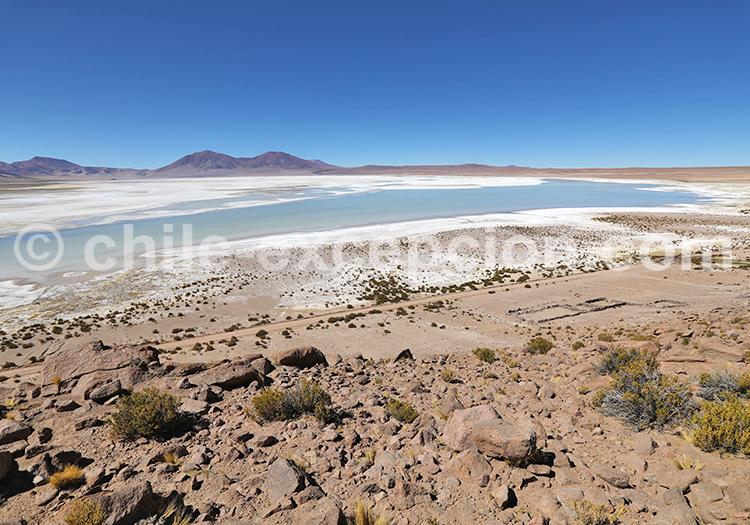 Salar de Huasco, désert du Nord du Chili