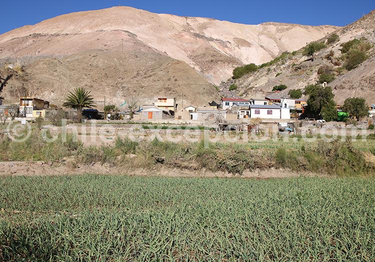 Chapiquita, vallée de Camiña, Chili