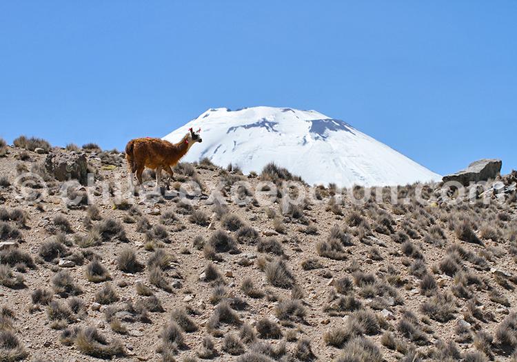 Nature de Caquena, Chili