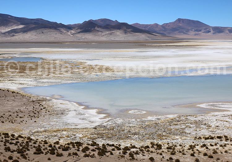 Salar de Huasco, saline naturelle du Chili