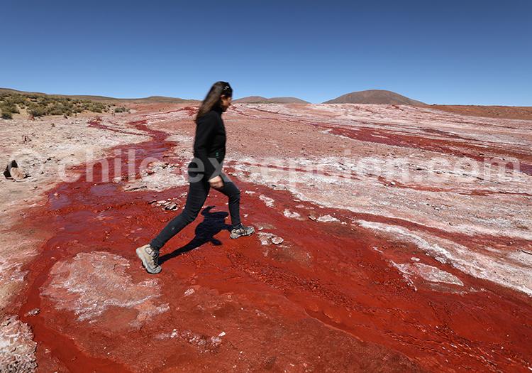 Comment se rendre à la Laguna Roja, Chili