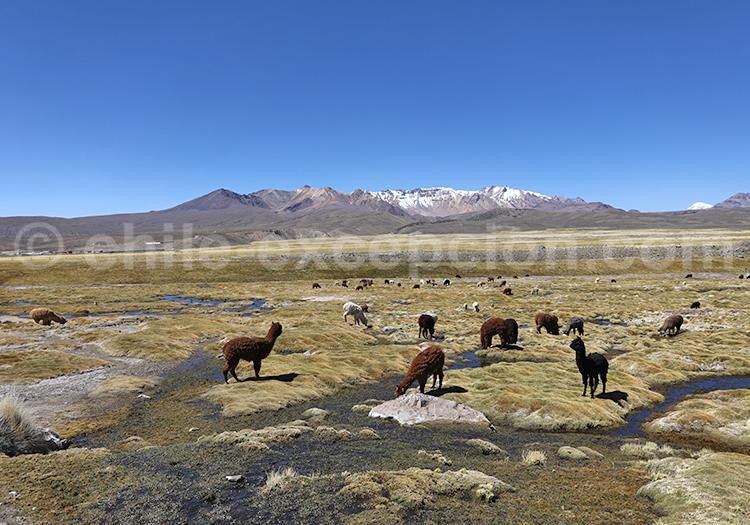 Voyage au Chili, au coeur de Andes