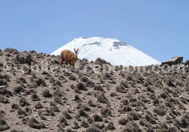 Nature région d'Arica, Nord du Chili