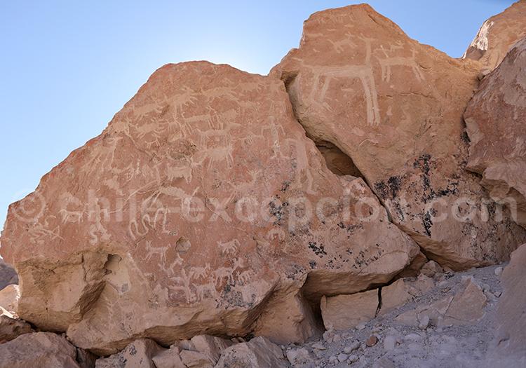 Pétroglyphes de Ofragía, vallée de Codpa