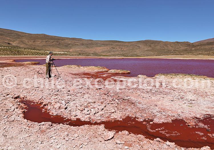 Photographie de paysage, lagunes du Nord du Chili