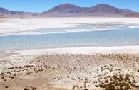 Salar de Huasco, Chili