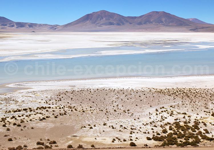 Les plus belles salines du Nord du Chili
