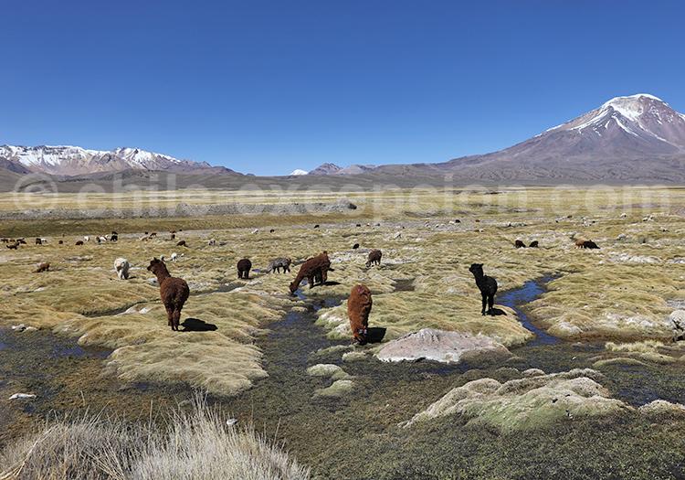Voyage au coeur des Andes, Chili