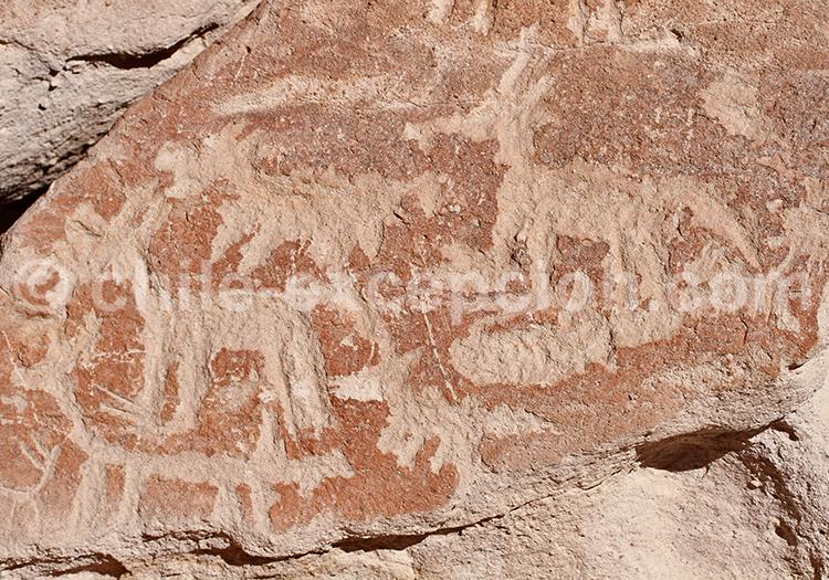 Découvrir les pétroglyphes du Nord du Chili