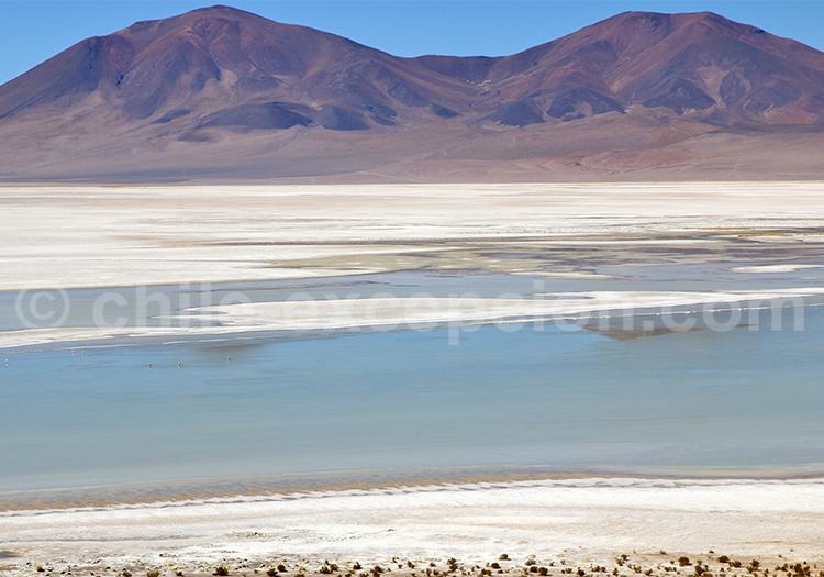 Salar du Camino Real, tour Chili et Bolivie