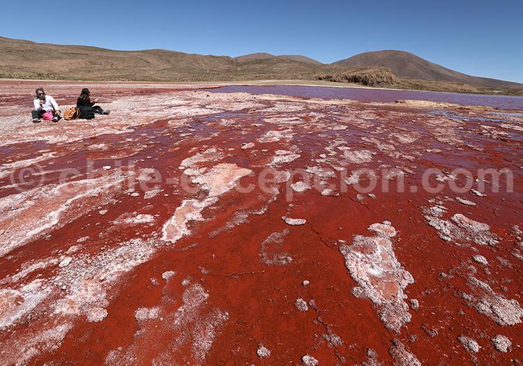 Laguna Roja, région d'Arica et de Parinacota au Chili