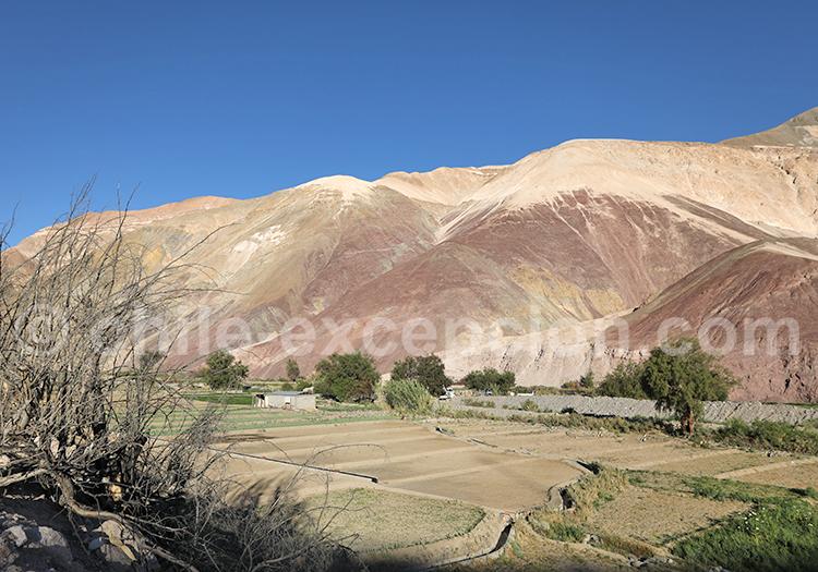 Quisama, vallée de Camiña, Chili