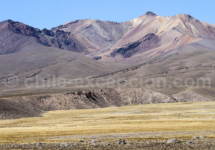 Altiplano andin, Nord du Chili