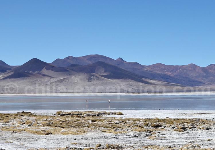 Salar de Huasco, Chili, frontière bolivienne