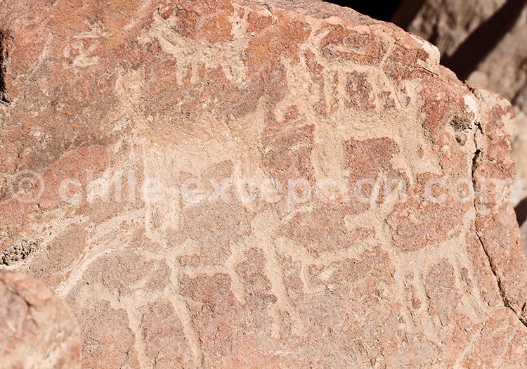 Pétroglyphes du Nord du Chili