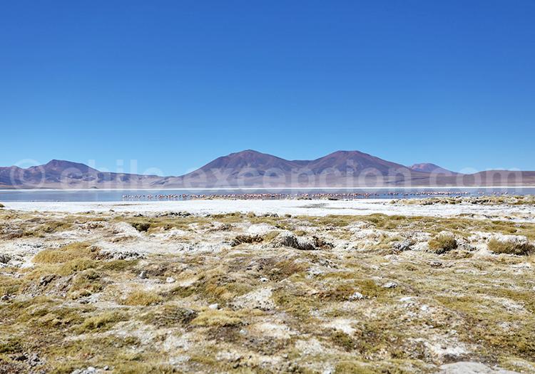 Saline en altitude, Salar de Huasco, Iquique